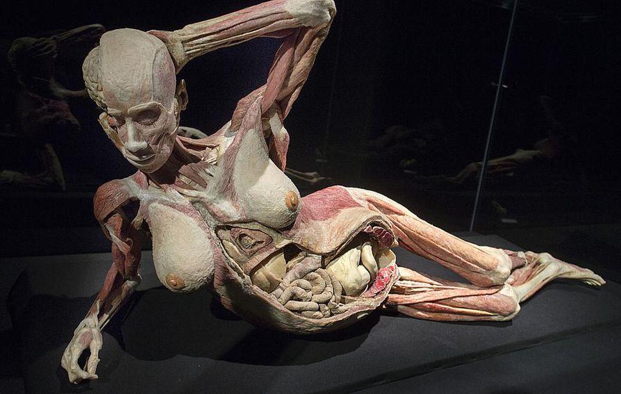 Oikeiden ruumiiden esittely on herättänyt suuria tunteita ensimmäisestä näyttelystä lähtien.