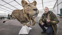 Eläintentäytön EM-kisat pidetään Ouluhallissa