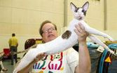 Kissanäyttely Kempeleessä