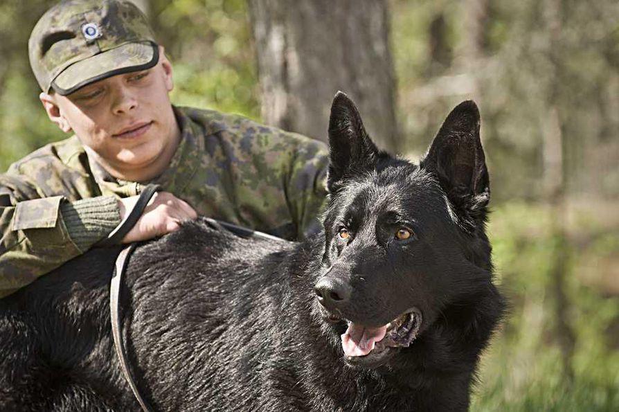 Koiranohjaaja Henri Halminen ja sotakoira E-Boss.