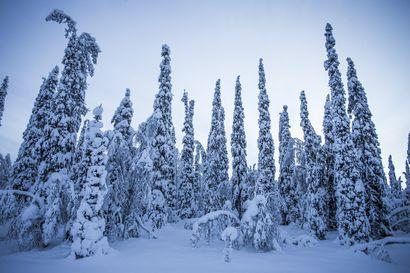 IPCC:n tuore erikoisraportti: ilmastonmuutoksella dramaattiset vaikutukset Suomen talviin – Lapin tunturilajisto vaarassa h?vit?