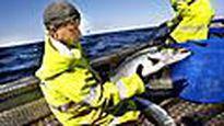 Kalastajan arkea avomerellä