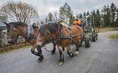 Hevosmetsuri siistii metsää Huonesuolla
