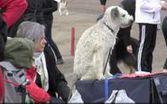 Oulun kansainvälinen koiranäyttely Äimärautiolla
