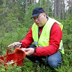 Sienihuuma täydessä vauhdissa – aloittelijan on turvallisinta aloittaa sienestysharrastus tateista