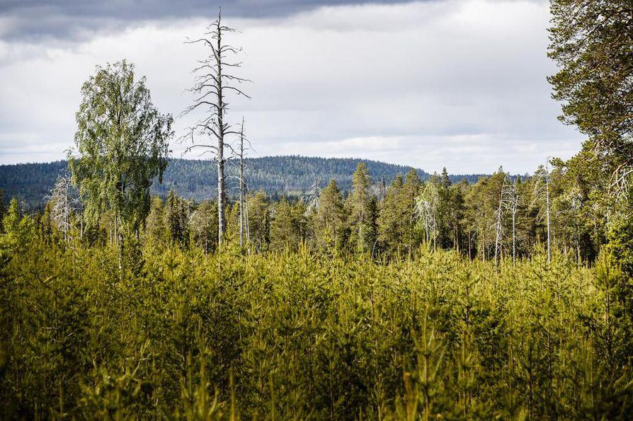 Kemera-tukea saa vuosittain noin 45 000 metsänomistajaa.