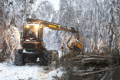 Lumen alle jäävä märkä maa homehtuu herkästi – metsätyöt vaikeutuvat ja porot lähtevät vaeltamaan, jos maa ei kuivu ennen pysyvää lunta