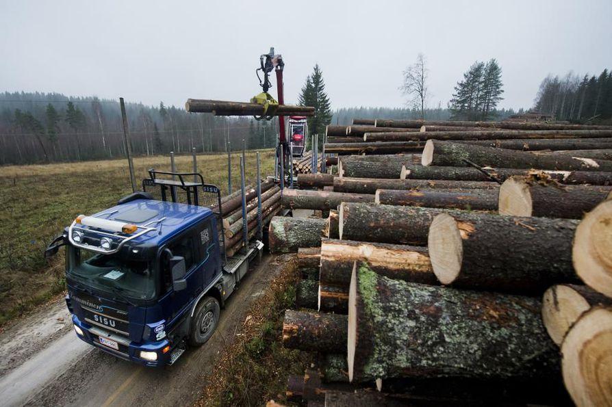 Keskimäärin puun tarjonta laski 11 prosenttia koko maan alueella ja Pohjois-Pohjanmaalla 10 prosenttia alkuvuonna. Arkistokuva.