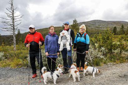 Pallas-Yllästunturin kansallispuistossa käy jo puoli miljoonaa matkailijaa vuodessa –Tunturi-Lapin matkailusta halutaan ympärivuotista, mutta kuinka volyymi kasvaa kestävästi?