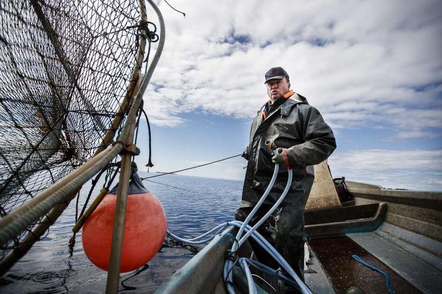 Kemiläinen kalastaja Markku Sotisaari on tavannut mereltä muutaman sairaan kalan pyyntikauden alussa. Kuvassa Sotisaari rysällä viime kesänä.