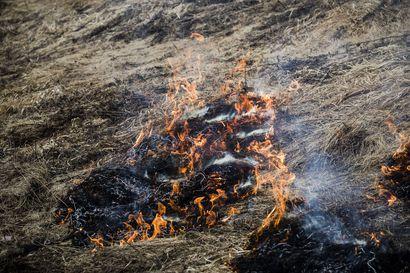 Tervolassa palaa hakkuualueella, Torniossa ja Posiolla pieniä maastopaloja – Palomestari pyytää tarkkuutta tulenkäsittelyyn