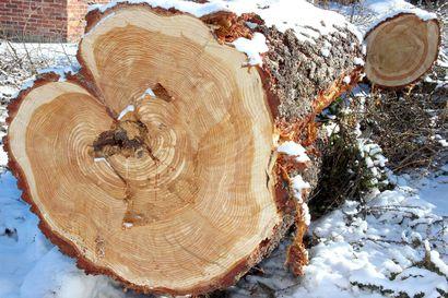 Nyt on aika kaivaa kuitit esiin – metsätalouden veroilmoitus tulee jättää maaliskuun alkuun mennessä