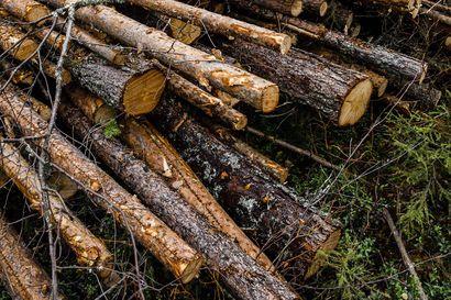 Jos kartelliepäilyille löytyy katetta, suomalaiset metsäjätit eivät ole oppineet virheistään mitään