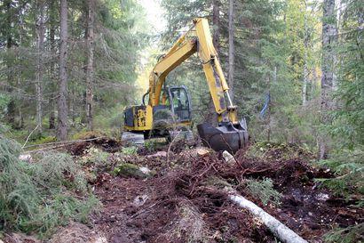 Lehtolaikku kuntoon Hanhivaarassa – puuta nurin ja ojia tukkoon aktiivisen luonnonhoidon hankkeessa