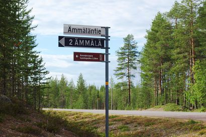 """Ämmänvaaran alueella on saamelaisten pyhä uhripaikka, jonka lähistöllä Kemijärven kaupunki aikoo tehdä harvennushakkuita – """"Esittelyssä tapahtui selkeä virhe"""""""