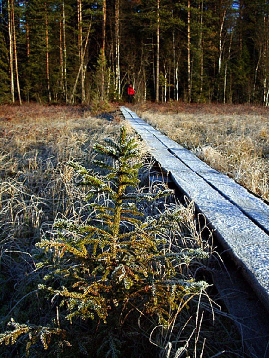 Pilpasuon Pitkoksilta Luontoelamyksia Oulu Kaleva Fi