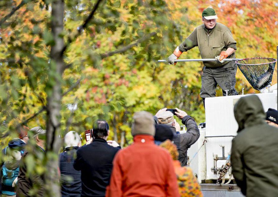 Paikalle oli kerääntynyt noin 50 ihmistä seuraamaan taimenin palauttamista puroihin.