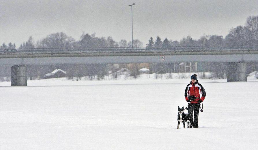 Oulujoella pääsee vielä kävelemään jään päällä, mutta kohta kevät sulattaa joen ja virtaamista odotetaan runsaita.