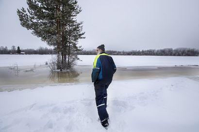 Lapinkankaalla Oulujoki tulvii pelloille – maanomistaja harmittelee sitä seuraavaa routaa ja kylvön venymistä