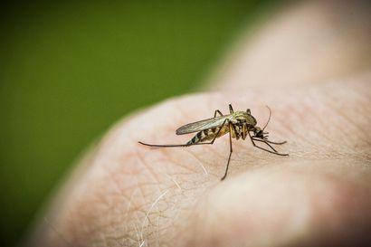 Lukijalta: Lopullinen ratkaisu hyttysille ei ole mahdollinen