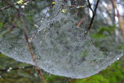 Puolangan Askankylälle perustettiin uusi luonnonsuojelualue –  Lehtosaaren luonnonsuojelualue on noin 57 hehtaarin kokoinen