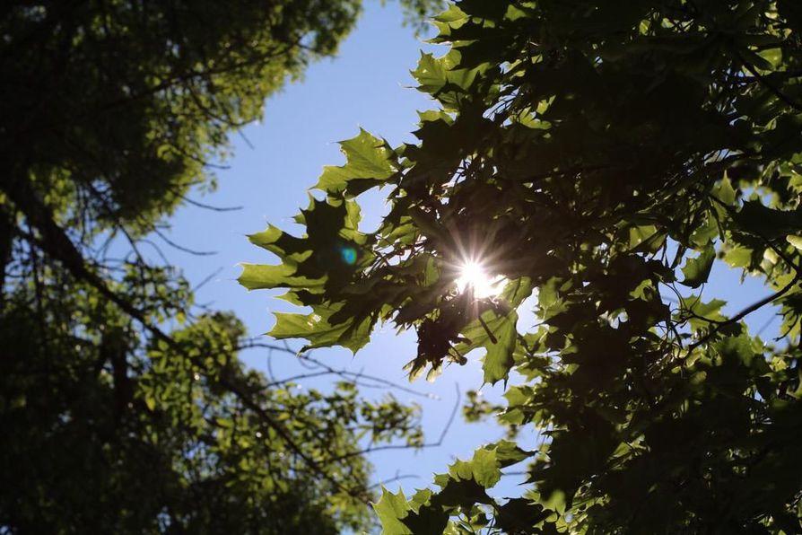 Heinäkuun alkupuoli oli kolea, mutta kuukauden viimeisenä viikonloppuna lämpötila nousi paikoin jopa poikkeuksellisen korkeaksi.
