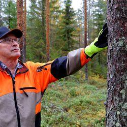 """Palkittu metsänhoitaja Kullervo Kanniainen: """"Me emme tuhoa, emmekä hävitä"""""""