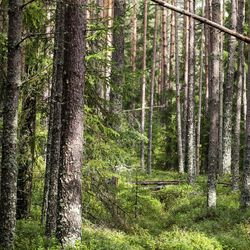 Kemera-tukea Pohjois-Pohjanmaalle yli 9 miljoonaa euroa