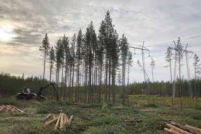 Sähkön tuotanto kasvaa pohjoisessa, kulutus etelässä – kantaverkon 300-kilometrinen metsälinja auttaa, mutta ei vielä riitä