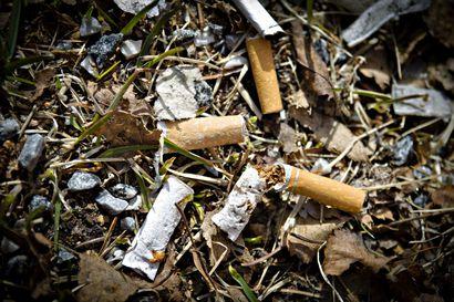 """Muoviroskan kerääjien saaliina Oulun Nallikarissa eniten tupakantumppeja – """"Osittain kysymys on tiedon puutteesta ja osittain siitä, että tottumus on niin vahva"""""""