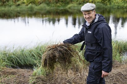 """""""Pussikämmekkää ei ole tavattu tässä kohteessa koskaan"""" – Englatilainen Stephen Venn  on kolunnut kaksi kesää Oulangan kansallispuistossa ja Posion Korouomassa kartoittamassa tulvaniittyjä"""