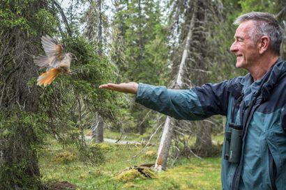 """Legendaarinen luontodokumentaristi ihastui Kuusamoon – """"En koskaan unohda kuukkelin laskeutumista kädelleni"""""""