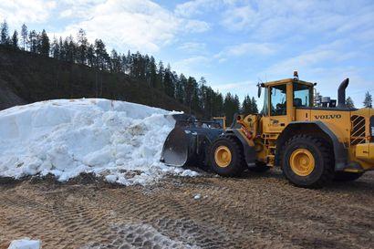 """Kuuma kesä sulatti lumivarastoa aiempia vuosia enemmän – ensilumenladun pituus vielä arvoitus Taivalkoskella: """"Lumikasa on sulanut nyt enemmän kuin koskaan aikaisemmin"""""""