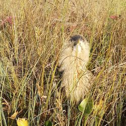 Sorsastusretki sai yllättävän käänteen Rovaniemellä –ruohikon seasta kurkisti harvinainen siivekäs