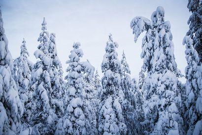 Luonnonsuojeluliitto perää Suomen metsien monimuotoisuuden säilyttämistä – tuore raportti esittelee 55 suojelunarvoista metsäkohdetta, niistä osa sijaitsee Koillismaalla