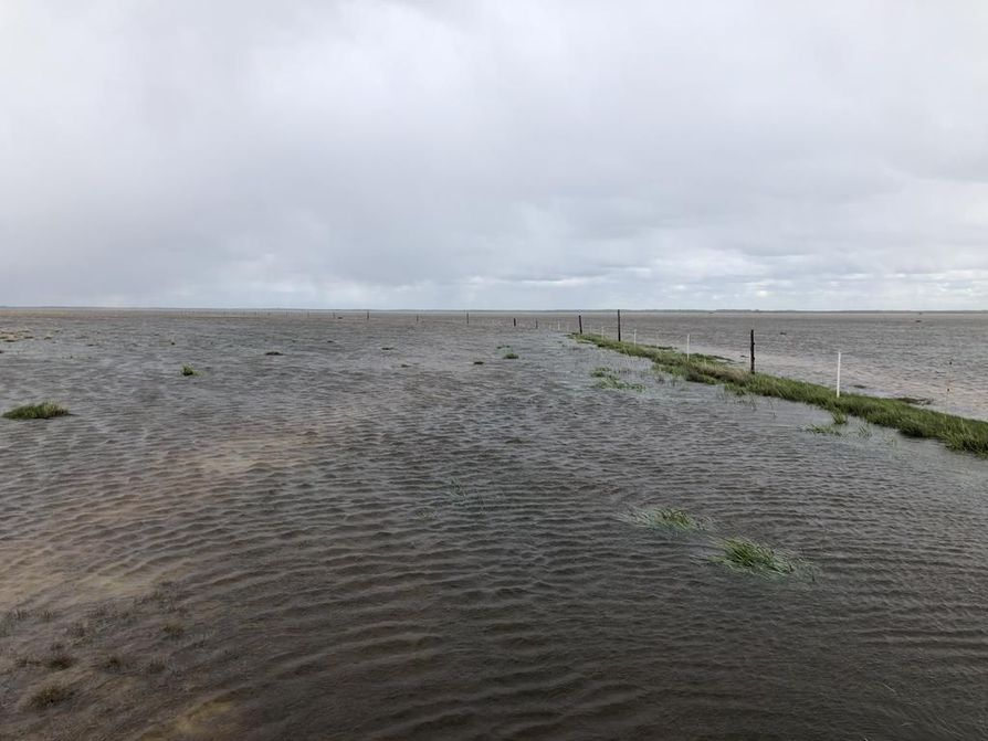 Veden alle jäänyttä kahlaajien pesimäniittyä Lumijoen Pitkällänokalla, Liminganlahdella. Tällä alueella pesii noin puolet Suomen kuudestakymmenestä eteläsuosirriparista.