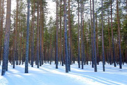 Siikalatvalle perustetaan uusi luonnonsuojelualue – Limpsiönmäen luonnonsuojelualueesta tulee 53 hehtaarin kokoinen