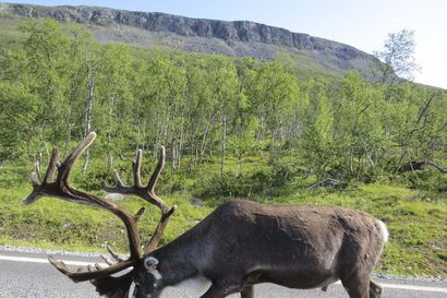 Löytö virastojen pöytälaatikoista, Pohjois-Lappiin tulossa 17 uutta luonnonsuojelualuetta