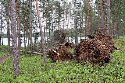 Sähkökatkot jatkunevat Kuusamossa juhannuksen yli ja vasta mökkiläisten tullessa selviää, kuinka paljon yksityisteitä on poikki – yksi henkilö loukkaantunut myrskyn vuoksi