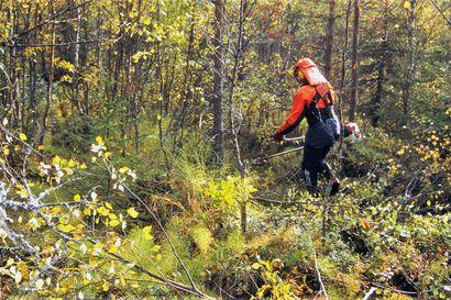 Otso Metsäpalvelut konkurssiin – voi johtaa kemera-tukien takaisinperintään