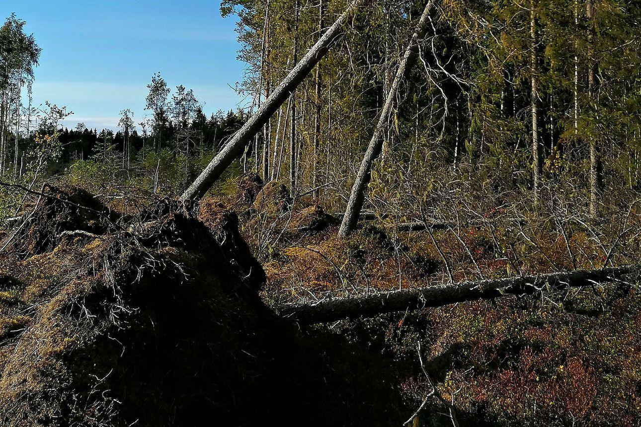 Myrskytuulet voimistuvat Pohjois-Pohjanmaalla päivän aikana – sähkökatkoja voi tulla, pihakalusteet kannattaa laittaa suojaan