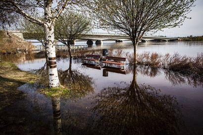 Suomen johtava tulvaennustaja muistaa vielä ensimmäisen epäonnistumisensa – nyt hän ennustaa sentilleen, milloin Kemijoen tulva on huipussaan