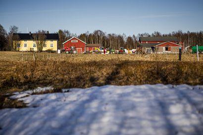 Peltotyöt jo viikkoja myöhässä Lapissa –Torniossa jo hiljalleen aloitellaan, mutta Ivalossa ei ole nurmilänttiäkään näkyvissä pelloilla