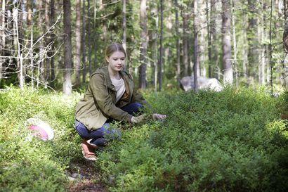 Pienestä pitäen marjastaneen Karoliina Posion, 20, pakastin Isossa-Britanniassa täyttyy kotimaisista marjoista – Hän ei tiedä parempaa paikkaa kuin pohjoissuomalaisten metsien ja soiden marja-apajat
