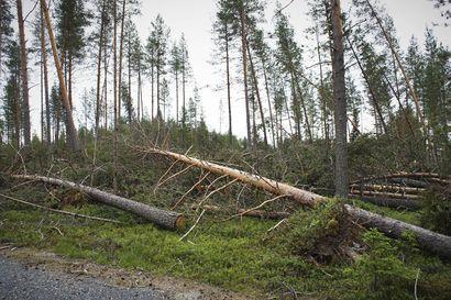 Suomen luonnonsuojeluliitto toivoo, että Paula-myrskyn riepottelemiin luonnonmetsiin perustettaisiin suojelualueita – Metsähallitus harkitsee toivetta