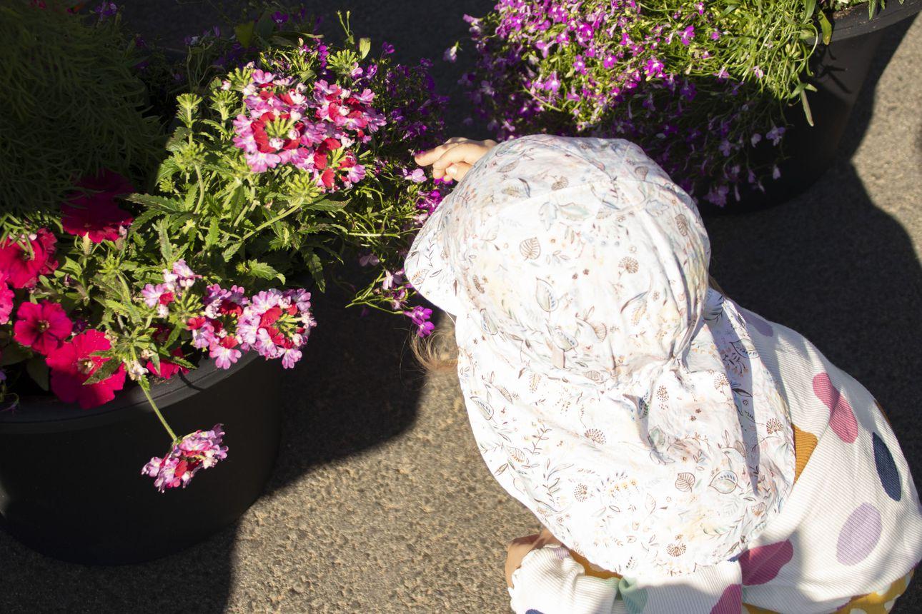Yrittäjäyhdistys ilahdutti kukkasin – päiväkoteihin kesäkukkia lasten hoidettavaksi