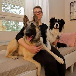 Anne Sipolan homekoira haistaa ongelmakohdat – Bordercollie Tinka on kutsuttu usein asuntokauppatilanteisiin