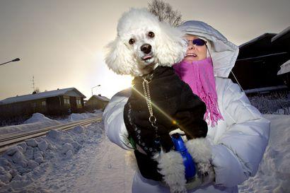 Kaikki koirat eivät nauti pakkasista: Katso pakkaspäivän muistilista koiranulkoilutukseen