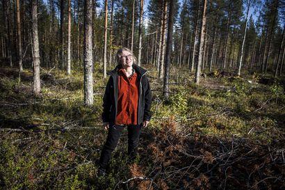 """Ilmastopolitiikka tuli valtion metsiin – """"Hiilensidonta otetaan nyt entistä paremmin huomioon"""", sanoo Metsähallituksen aluejohtaja Kii Korhonen"""