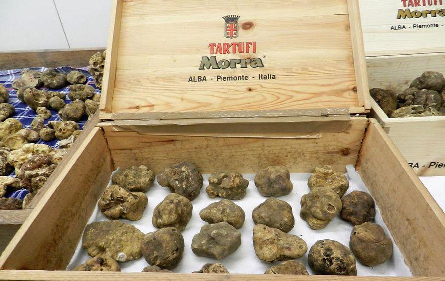 Giacomo Morra keksi jo 90 vuotta sitten mainion markkinointikikan valkoisille tryffeleille: Vuosittain Albassa järjestetään suuret tryffelimarkkinat ja lähetetään iso tryffeli kuuluisalle henkilölle.
